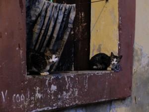 窓際の猫、パナジ、ゴア
