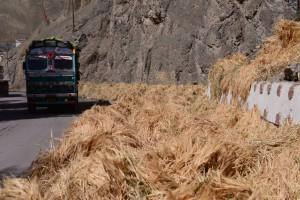収穫の季節、サスポル